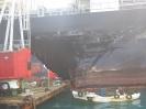 MSC Ilona NSB Reederei